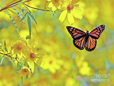Photograph - Monarch On Yellow by Art Cole