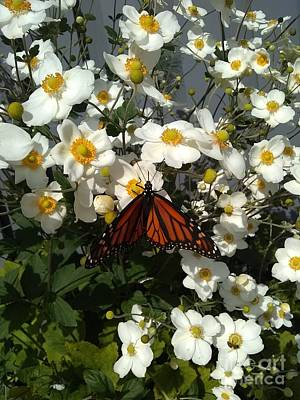 Photograph - Monarch Rested On Anemone  by Lingfai Leung