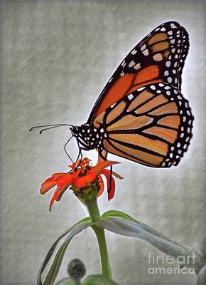 Photograph - Monarch by Savannah Gibbs