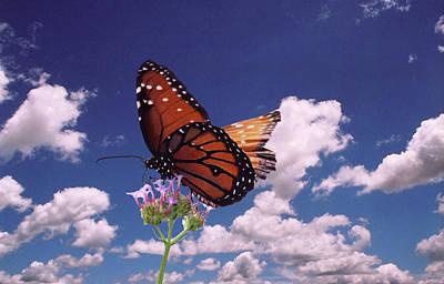 Digital Art - Monarch by Steve Karol
