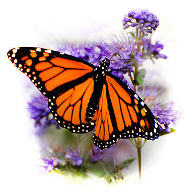 Photograph - Monarch With Open Wings by Kathleen Stephens