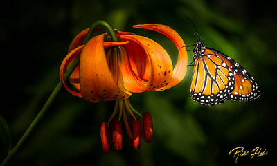 Photograph - Monarchs And Tiger Lilys by Rikk Flohr