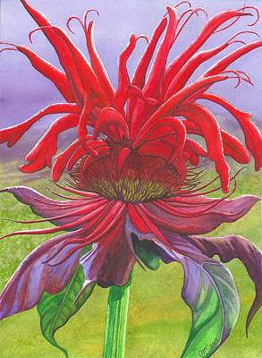 Bee Balm Painting - Monarda by Catherine G McElroy