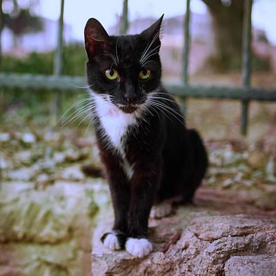 Photograph - Monastery Cat by Jouko Lehto
