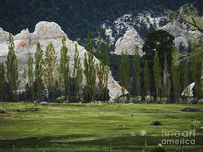 Photograph - Monets Garden by L Cecka