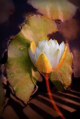 Photograph - Monet's Lilies by Debra and Dave Vanderlaan