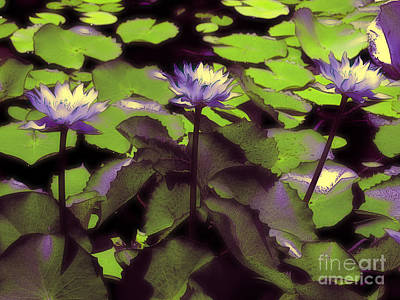 Photograph - Monets Lillies by Karen Lewis