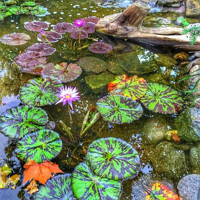 Photograph - Monet's Pond At The Fair by Jame Hayes
