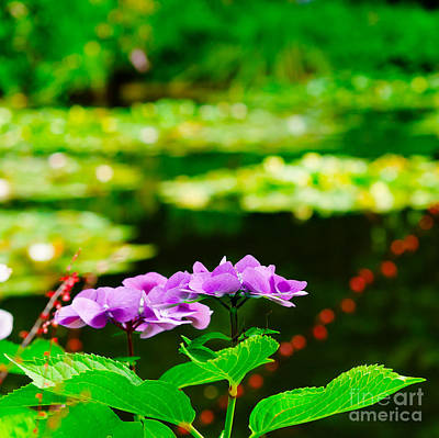 Photograph - Monet's Purple Lace Hydrangeas  by MaryJane Armstrong