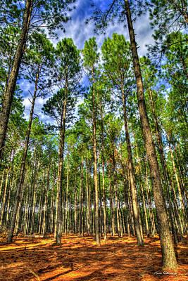 Photograph - Money Growing On Trees Georgia Pine Tree Art by Reid Callaway