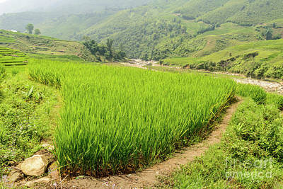 Photograph - Muong Hoa Valley 1 by Werner Padarin