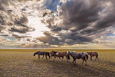 Photograph - Mongolian Horses by Hitendra SINKAR