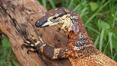 Photograph - Monitor Lizard 1 by Gary Crockett