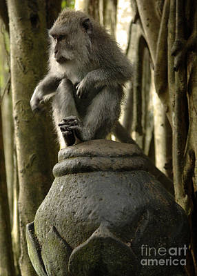 Photograph - Monkey Bali Indonesia by Bob Christopher