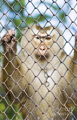 Photograph - Monkey Behind Bars by Jorgo Photography - Wall Art Gallery