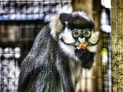 Photograph - Monkey Break by Joseph Caban