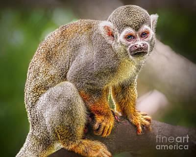 Photograph - Monkey Business by Judy Kay