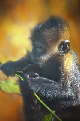 Photograph - Monkey Business by Lynn Bauer