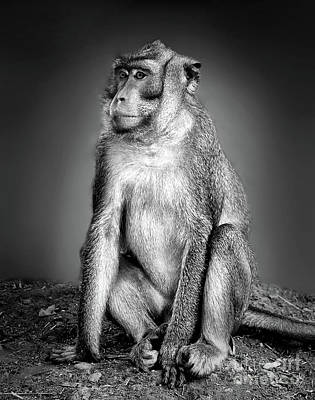 Photograph - Monkey by Charuhas Images