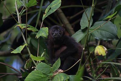 Photograph - Monkey Face by L L