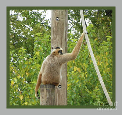 Photograph - Monkey Hang On by Shirley Moravec