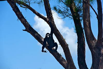Photograph - Monkey In A Tree by Denise Mazzocco