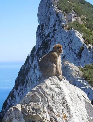 Monkey In Gibraltar Original by Heather Coen