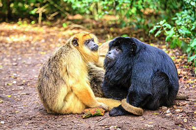 Photograph - Monkey Love by Alexey Stiop
