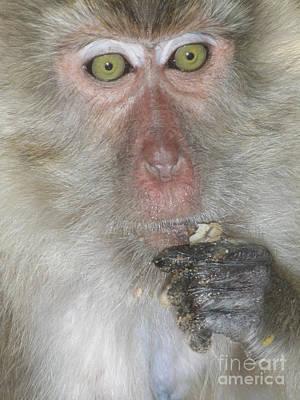 Photograph - Monkey Manners by Tara Turner