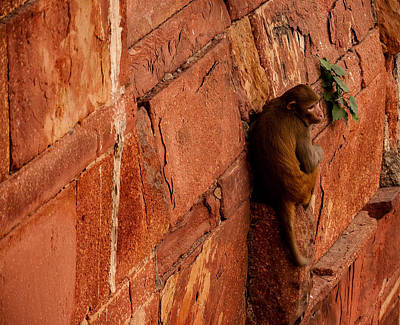 Photograph - Monkey by M G Whittingham