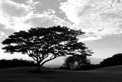 Photograph - Monkey Pod Tree In Black And White by Kirsten Giving