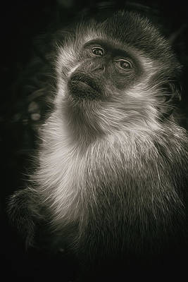 Monkey Portrait Art Print