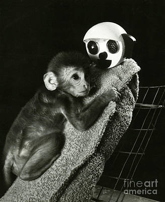 Behavioral Photograph - Monkey Research by Photo Researchers, Inc.