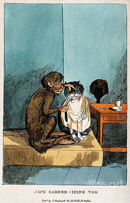 Photograph - Monkey Shaving A Cats Whiskers by Wellcome Images