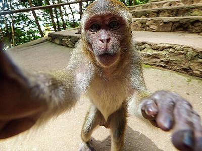 Monkey Taking A Selfie Art Print