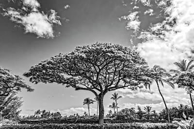 Monkeypod Tree 2 Art Print