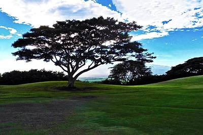 Photograph - Monkeypod Tree In Maui by Kirsten Giving