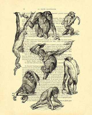 Chimpanzee Digital Art - Monkeys Black And White Illustration by Madame Memento