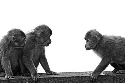 Monkeys Getting Ready For Fight At Chinese Temple Art Print by Flemming Søgaard Jensen