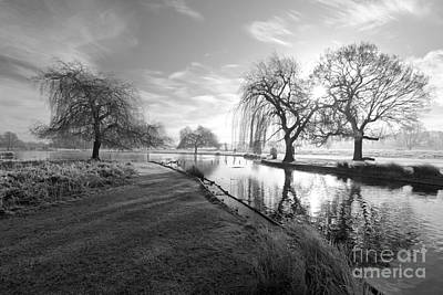 Mono Bushy Park Uk Art Print