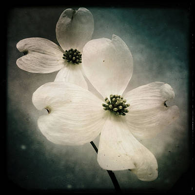 Photograph - Mono Dogwood by Dorian Hill