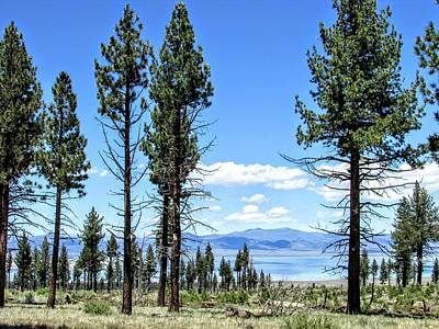 Photograph - Mono Lake Trees by Marilyn Diaz