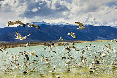 Photograph - Mono Lake With Seagulls by Ben Graham