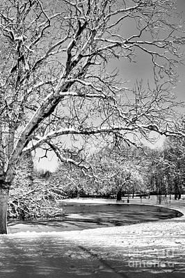 Photograph - Mono Winter Tree by Baggieoldboy