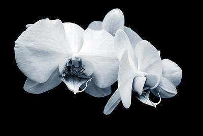 Digital Art - Monochromatic Orchid Phalaenopsis by Evelyn Odango