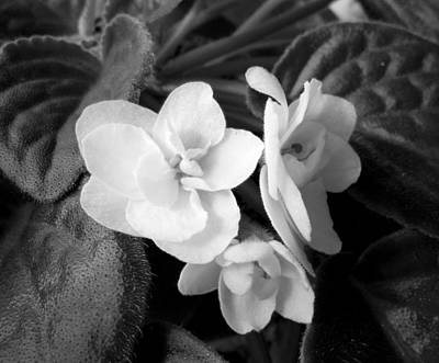 Photograph - Monochrome African Violet by Erika H