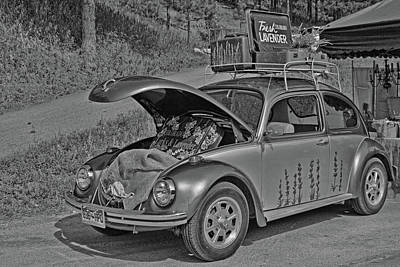 Photograph - Monochrome Beetle by Alana Thrower