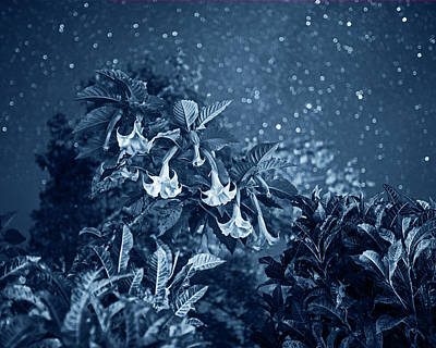 Photograph - Monochrome Blue Nights Rainforest Flowers Belmopan Belize Starry Skies by Toby McGuire