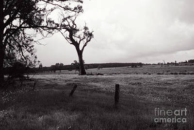 Photograph - Monochrome Farm by Cassandra Buckley