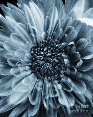 Photograph - Monochrome Floral Overlay by Joan-Violet Stretch